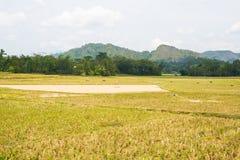 Oszałamiająco krajobraz woda wypełniał ryżowych pola i scenicznego cloudscape w Taniec Toraja, Południowy Sulawesi, Indonezja Sze Obrazy Royalty Free