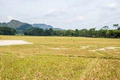 Oszałamiająco krajobraz woda wypełniał ryżowych pola i scenicznego cloudscape w Taniec Toraja, Południowy Sulawesi, Indonezja Sze Zdjęcie Royalty Free
