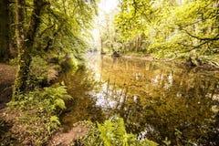 Oszałamiająco las scena przy Gara mostem w Devon, Anglia Zdjęcie Stock