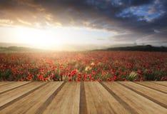 Oszałamiająco maczka pola krajobraz pod lato zmierzchu niebem z drewnem fotografia stock