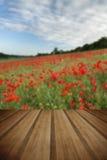 Oszałamiająco maczka pola krajobraz pod lato zmierzchu niebem z drewnem zdjęcie royalty free