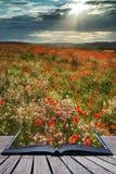 Oszałamiająco maczka pola krajobraz w lato zmierzchu świetle konceptualnym fotografia stock