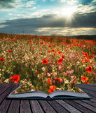 Oszałamiająco maczka pola krajobraz w lato zmierzchu świetle konceptualnym obrazy royalty free