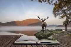 Oszałamiająco potężny czerwonego rogacza jeleń patrzeje out przez jezioro w kierunku mo zdjęcie royalty free