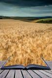 Oszałamiająco pszenicznego pola krajobraz pod lato zmierzchu burzowym niebem co Fotografia Royalty Free