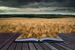 Oszałamiająco pszenicznego pola krajobraz pod lato zmierzchu burzowym niebem co Obrazy Stock