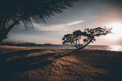 Oszałamiająco purpurowy zmierzch na tropikalnym kurorcie blisko oceanu Zdjęcie Royalty Free