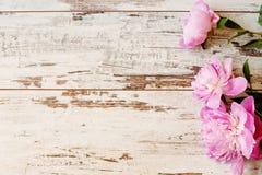 Oszałamiająco różowe peonie na światła białego nieociosanym drewnianym tle Odbitkowa przestrzeń, kwiecista rama Rocznik, mgiełki  zdjęcia stock