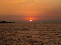 Oszałamiająco słońce Wzrasta nad zatoką Tajlandia z Uncountable Seagulls Obraz Stock