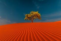 Oszałamiająco widok osamotnione piasek diuny Obraz Royalty Free
