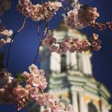 Oszałamiająco wiosna widok pogrążeni parki i monastery w Kyiv lub Kijów zielony kapitał Ukraina Obrazy Royalty Free