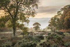 Oszałamiająco zimy mgłowy wschód słońca nad wsią wokoło Crummock W Zdjęcia Stock