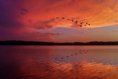 Oszałamiająco zmierzchu niebo Odbijający na Relaksującym jeziorze Z Kanadyjskimi gąskami Lata koszt stały fotografia stock