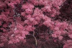 Oszałamiająco alternacyjny wibrujący kolorowy lasu krajobrazu drzewa concep Obrazy Royalty Free