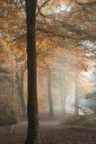 Oszałamiająco kolorowego markotnego wibrującego jesień spadku mgłowy lasowy landsca Zdjęcie Stock