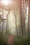 Oszałamiająco kolorowego wibrującego sugestywnego jesień spadku lasu mgłowy lan Fotografia Stock