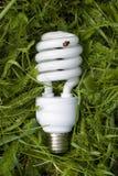 oszczędność energii światła żarówki Obraz Royalty Free