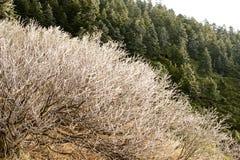 Oszraniającego krajobraz wysoka równina Zdjęcie Royalty Free