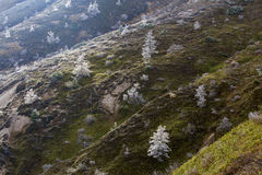 Oszraniającego krajobraz wysoka równina Obraz Royalty Free