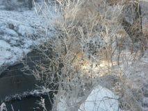 Oszronieje zakrywającego drzewo above strumienia w zachodnim Indiana obrazy stock
