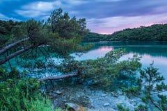 Ot сосен берег воды Стоковые Изображения RF