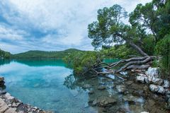 Ot dei pini la riva dell'acqua Immagini Stock