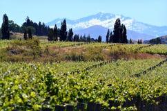 Otago - Neuseeland Lizenzfreies Stockfoto