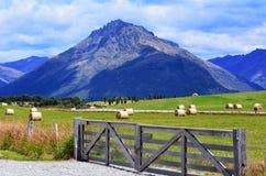 Otago - Nya Zeeland Arkivbild