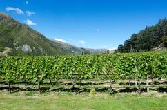 Otago - Nya Zeeland Royaltyfri Bild