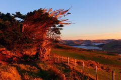 Otago Peninsula, Dunedin Stock Photography