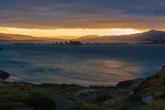 OTAGO PENINSULA, DUNEDIN/NEW ZEALAND - FEBRUARY 19 : Waiting for Stock Photography