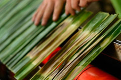 Otak d'Ota Photo stock