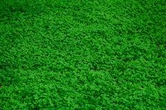 Otaliga nya och gröna sidor Royaltyfri Bild