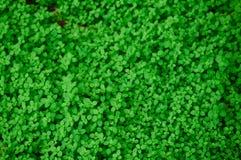 Otaliga nya och gröna sidor Arkivbild