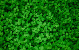 Otaliga nya och gröna sidor Fotografering för Bildbyråer
