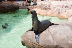 Otarie en monde de mer de San Diego Photographie stock