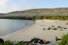 Otaries sur l'île d'Espanola - Galapagos Photo stock