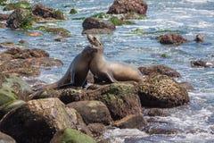 Otaries sur la plage Images libres de droits