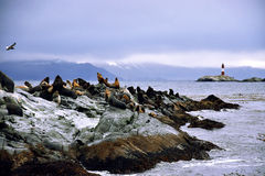 Otaries sur une roche Photo stock