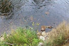 Otava-Fluss, Tschechische Republik lizenzfreie stockfotografie