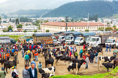 Otavalo Dierlijke Markt Royalty-vrije Stock Fotografie