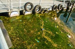 OTAVALO, EKWADOR, WRZESIEŃ 03, 2017: Zamyka up spławowa platforma, z widokiem brudnej wody z nadwodnymi roślinami Obraz Stock