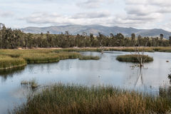 Otay Lakes County Park with Marsh Grass in Lake and Mountains Stock Photos