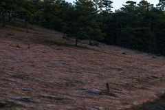 22, Otc, 2016 - herbe rose dans la forêt de pin dans la fuite Dong Vietnam de Dalat- Image stock