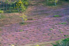 22, Otc, 2016 - hierba rosada en bosque del pino en la fuga Dong Vietnam de Dalat- Imágenes de archivo libres de regalías