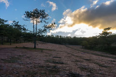 22, Otc, 2016 - la salida del sol, la nube beatyful e hierba rosada en bosque del pino en la fuga Dong Vietnam de Dalat- Fotografía de archivo