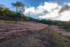 22, Otc, 2016 - la salida del sol, la nube beatyful e hierba rosada en bosque del pino en la fuga Dong Vietnam de Dalat- Imágenes de archivo libres de regalías