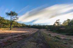 22, Otc, 2016 - la salida del sol, la nube beatyful e hierba rosada en bosque del pino en la fuga Dong Vietnam de Dalat- Imagen de archivo