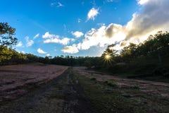 22, Otc, 2016 - o nascer do sol, a nuvem beatyful e a grama cor-de-rosa na floresta do pinho em Dalat- Lam o dong Vietname Fotografia de Stock