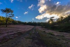22, Otc, 2016 - o nascer do sol, a nuvem beatyful e a grama cor-de-rosa na floresta do pinho em Dalat- Lam o dong Vietname Fotografia de Stock Royalty Free
